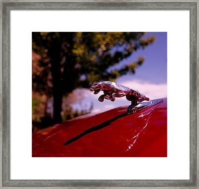 Jaguar Framed Print by Rona Black