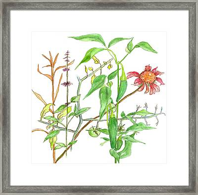 Jalapeno Coneflower Framed Print by Cathie Richardson