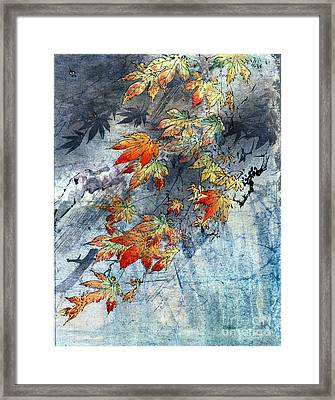 Japanese Maple Framed Print by Carol Pietrantoni