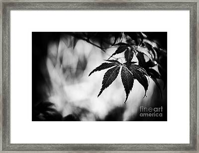 Japanese Maple Framed Print by Tim Gainey