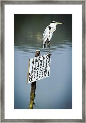 Japanese Waterfowl - Kyoto Japan Framed Print by Daniel Hagerman