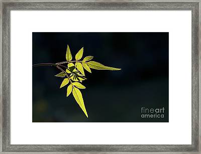 Jasmine Leaves  Framed Print by Tim Gainey