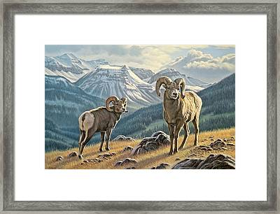 Jasper Rams Framed Print by Paul Krapf