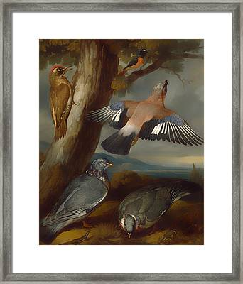 Jay Woodpecker Pigeons And A Redstart Framed Print by Mountain Dreams