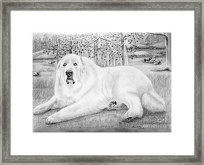 Jed Framed Print by Lena Auxier