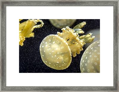 Jelly Fish Framed Print by Jijo George