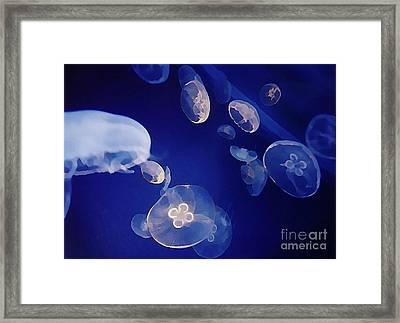 Jelly Fish Framed Print by John Malone