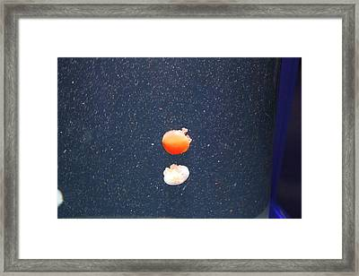 Jellyfish - National Aquarium In Baltimore Md - 121239 Framed Print by DC Photographer