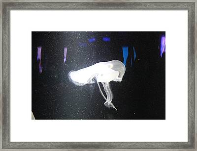 Jellyfish - National Aquarium In Baltimore Md - 121244 Framed Print by DC Photographer