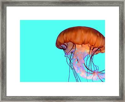 Jellyfish Framed Print by Tanias Reign