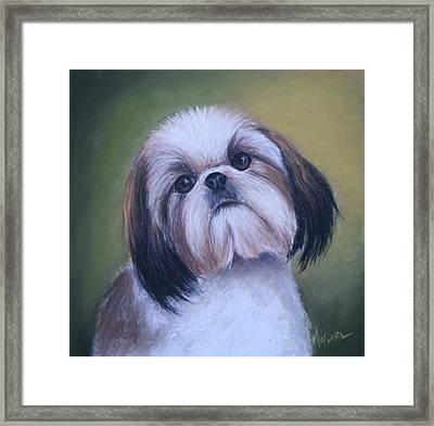 Jenny Wren Shih Tzu Puppy Framed Print by Melinda Saminski