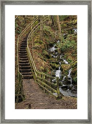 Jepson's Clough Forest. Framed Print by Daniel Kay