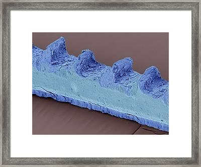 Jeweller's Hacksaw Blade Framed Print by David Mccarthy