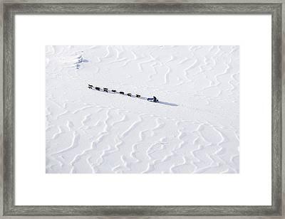 John Bakers Team Running Down Frozen Yukon River  Framed Print by Jeff Schultz
