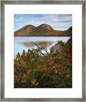 Jordan Pond With Berries Framed Print by Darylann Leonard Photography