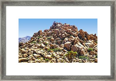 Joshua Tree - 01 Framed Print by Gregory Dyer