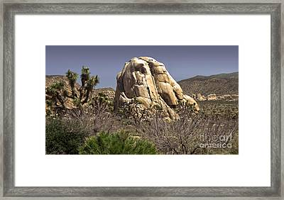 Joshua Tree - 02 Framed Print by Gregory Dyer