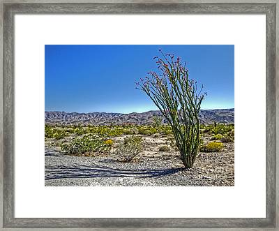 Joshua Tree - 19 Framed Print by Gregory Dyer