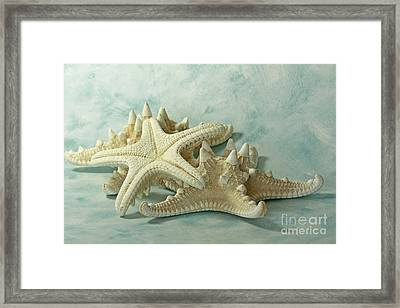 Journey To The Sea Starfish Framed Print by Inspired Nature Photography Fine Art Photography