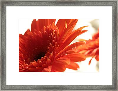Joy Jumping  Framed Print by Connie Handscomb