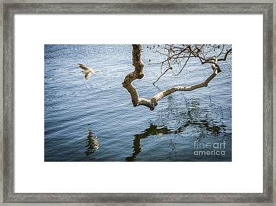 Joy Of Freedom Framed Print by Ning Mosberger-Tang