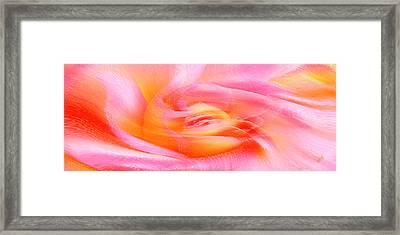 Joy - Rose Framed Print by Ben and Raisa Gertsberg