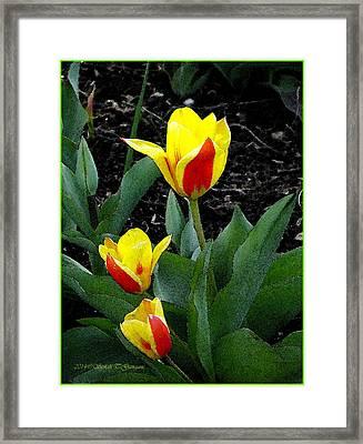 Joyful Spring Framed Print by Sonali Gangane