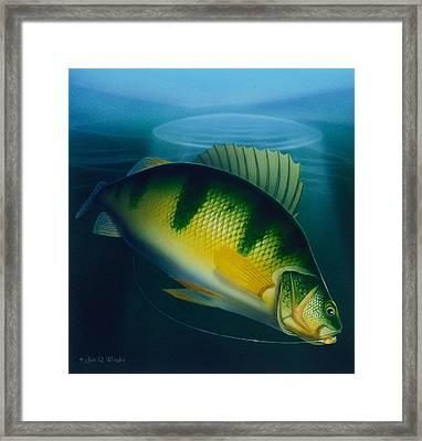 Jumbo Perch Ice Fishing Framed Print by Jon Q Wright