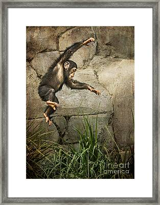 Jump For Joy Framed Print by Jamie Pham