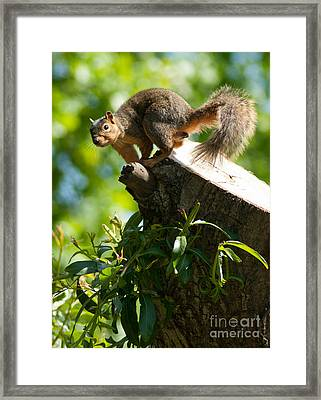 Jump Framed Print by Optical Playground By MP Ray