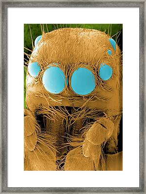 Jumping Spider's Head Framed Print by Thierry Berrod, Mona Lisa Production