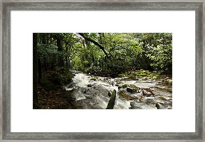 Jungle Flow Framed Print by Les Cunliffe