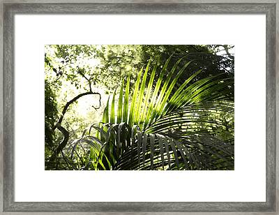 Jungle Light Framed Print by Les Cunliffe