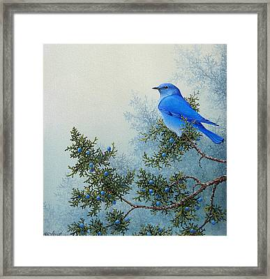 Juniper Berries Framed Print by Mike Stinnett