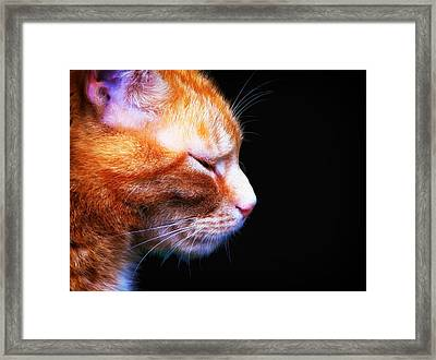Just A Catnap Framed Print by Mountain Dreams