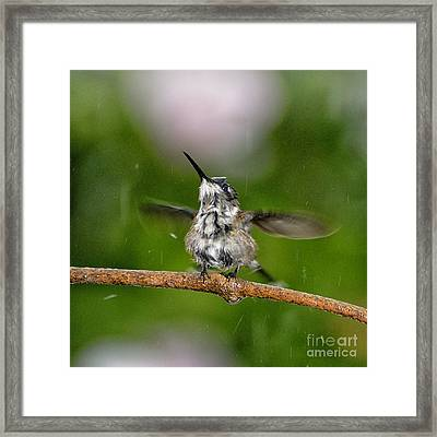 Just A Sittin' In The Rain Framed Print by Betty LaRue