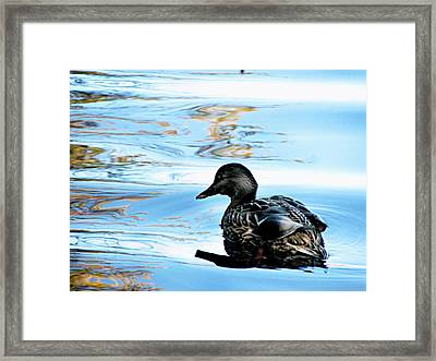Just Ducky Framed Print by Colleen Kammerer