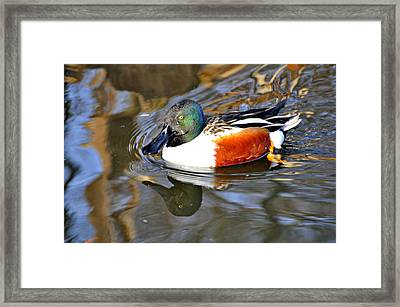 Just Ducky Framed Print by Marty Koch