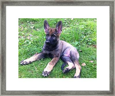 Just Ears And Legs Framed Print by Teresa A Lang