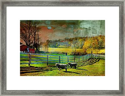 Just For Wool Framed Print by Diana Angstadt