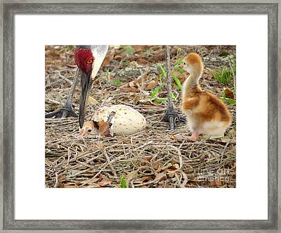 Just Hatching Framed Print by Zina Stromberg