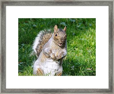 Just Nuts Framed Print by Arielle Cunnea