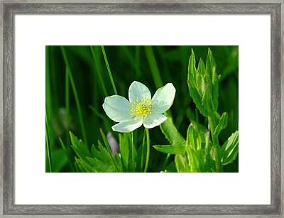 Just One Pretty Flower Framed Print by Jeff Swan