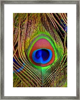 Just One Tail Feather Framed Print by Angelina Vick
