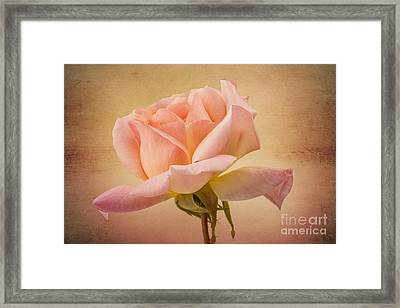 Just Peachy Framed Print by Clare Bambers