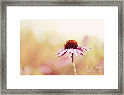 Just Peachy Framed Print by Beve Brown-Clark Photography