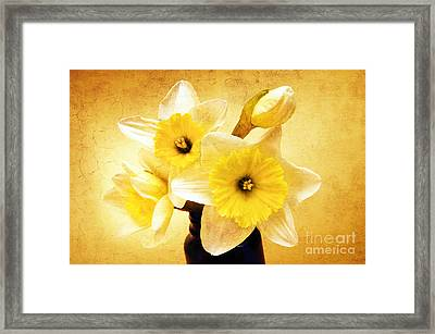 Just Plain Daffy 1 - Flora - Spring - Daffodil - Narcissus - Jonquil Framed Print by Andee Design