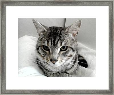 Just Relaxing Framed Print by Julie Dunkley