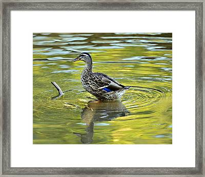Just Restin' Framed Print by Susan Leggett