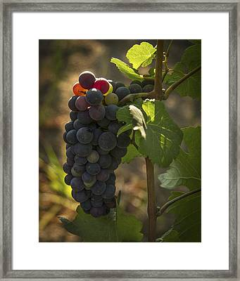 Just Waking Up Framed Print by Jean Noren